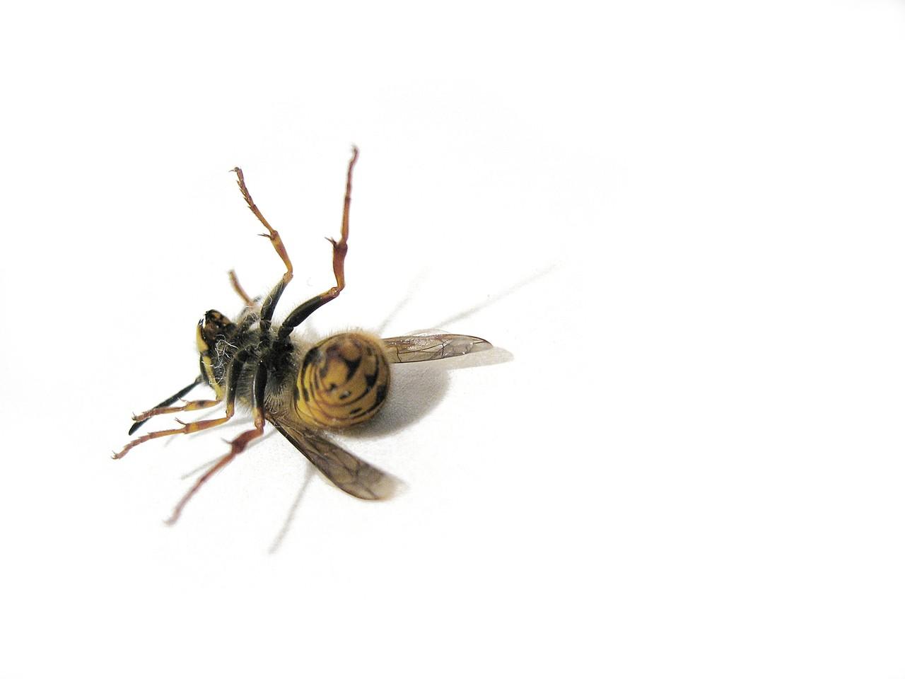Na czym polegają testy alergiczne?
