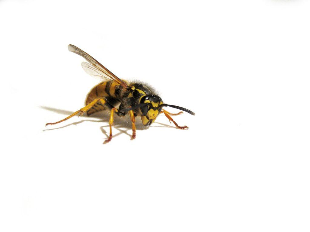 Najczęściej spotykane alergeny